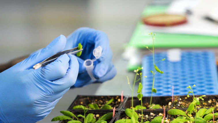 Nanotechnology for Plant Genetic Engineering