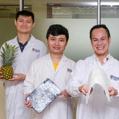 Upcycling Pineapple Leaves into Eco-Aerogels