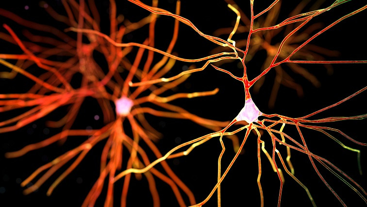 Bringing Drugs to the Brain with Nanoparticles to Treat Neurodegenerative Diseases
