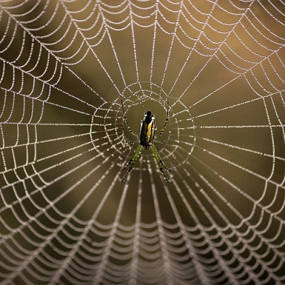 Inspired by Spiders: Antiadhesive Nanostructured Comb for Taming Unruly Nanofibers
