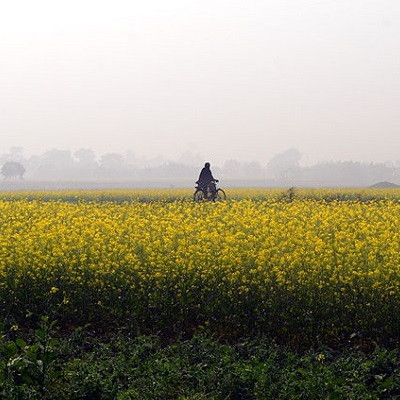 India is Drawing up Safety Guidelines for Using Nanoproducts in Agriculture