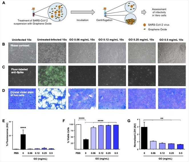 Graphene oxide (GO) entraps the SARS-CoV-2 virus and prevents infection