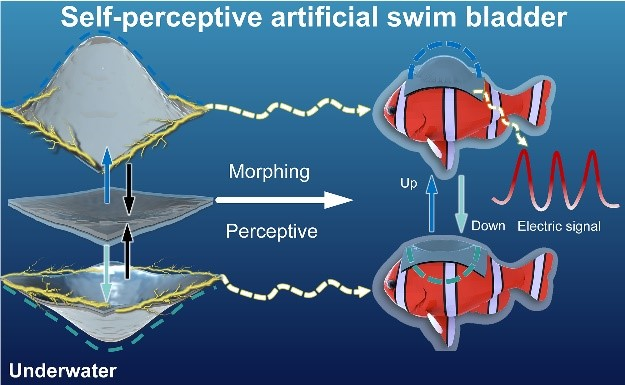 The self-perspective artificial swim bladder perceives the ambient environment
