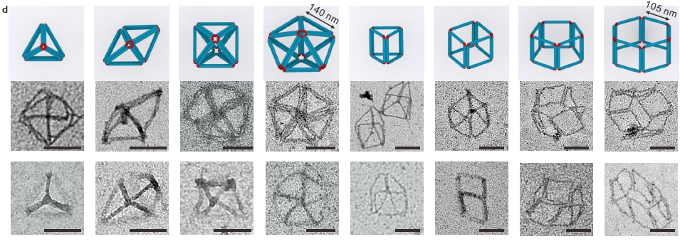 Models and transmission electron microscopy images of various 3D polyhedra