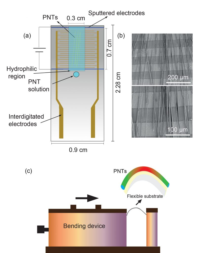 Optical (a-c) and lateral piezoresponse force microscopy (LPFM) phase images (d-f) of the peptide nanotubes on interlocking electrode substrates
