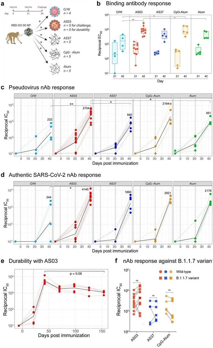 SARS-CoV-2 RBD-NP immunization induces robust antibody responses a, Schematic representation of the study design.