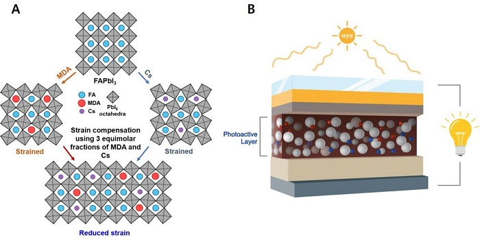 The inner structure of the newly-developed photoactive layer