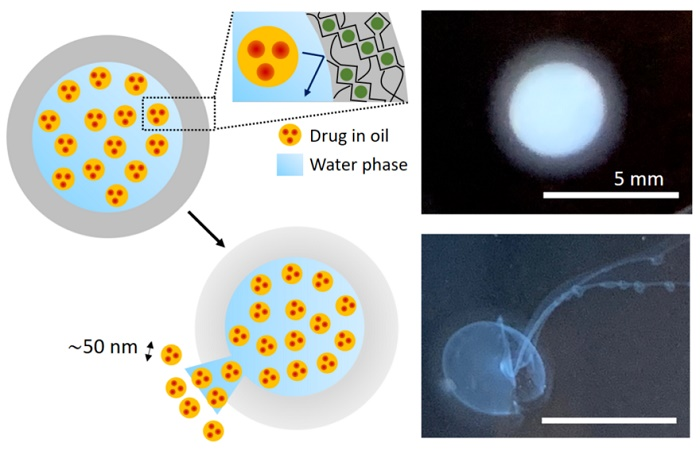 These schematics and photographs illustrate a) a small capsule containing thousands of nano-sized droplets loaded with a drug or other active ingredient; and b) how the droplets burst from the capsule after a set amount of time