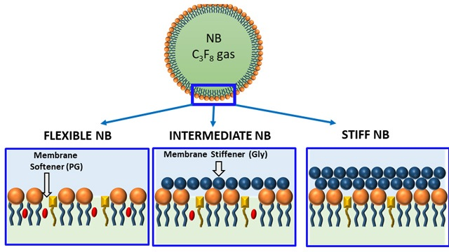 Schematic of bubble membrane showing the influence of membrane stiffener and membrane softener in the phospholipid packing