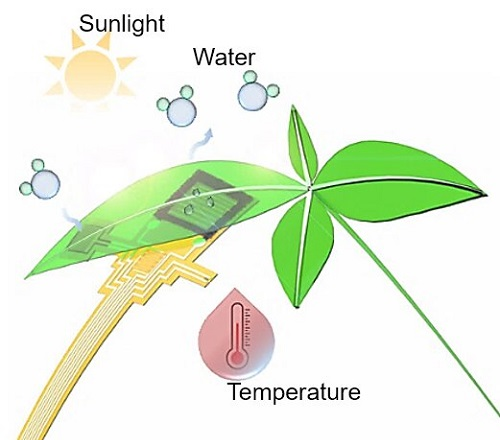 Integrated flexible device attached onto the lower epidermis of the leaf to monitor transpiration processes